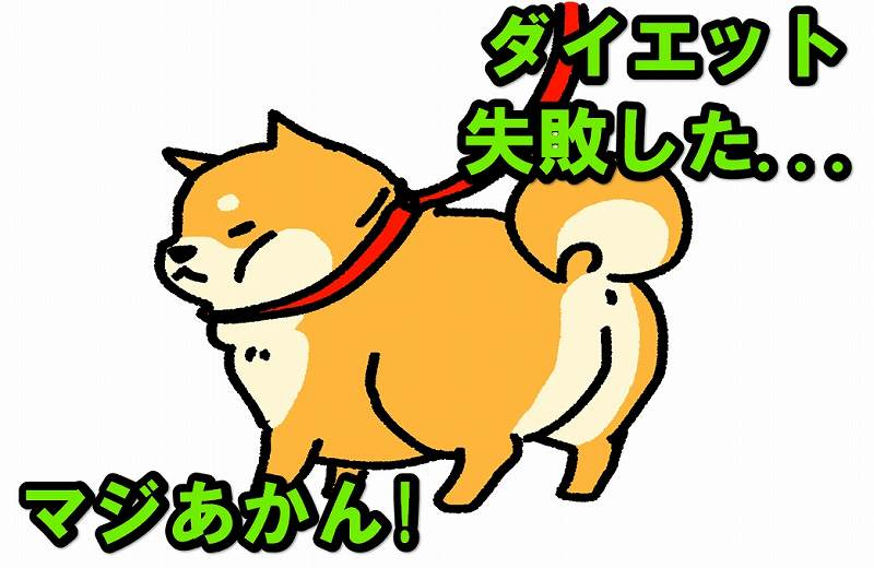 太った柴犬