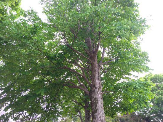 緑の葉が生えた木