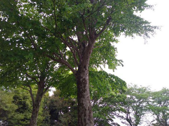 緑が生い茂る木々