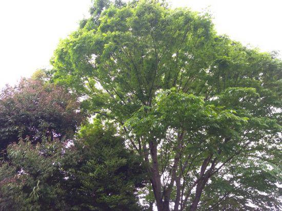 緑が生い茂る木