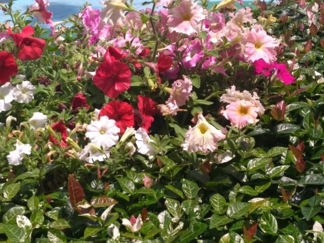 ピンクや赤い花